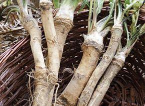 Kezeljük organikusan a kertet, tormával - gazigazito.hu
