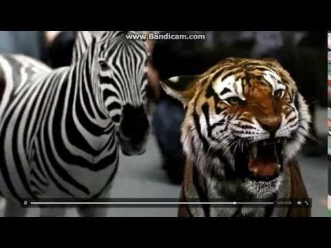 Zoo Season 2 » MovieTube   Full Movie Tube Now   Free Movies Online Zoo Season 2 episode 3 already http://www.movietube-now.biz/tv-series/1587-zoo-season-2-full-episode-movie-tube-now.html #zoo #zooseason2 #putlocker #movietube #movie #netflix #watch32