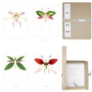 Floristen & Fotografen Serie 7, bildbox 4st a4