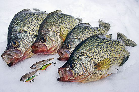 244 best my fishing hole images on pinterest fishing for Best ice fishing jigs