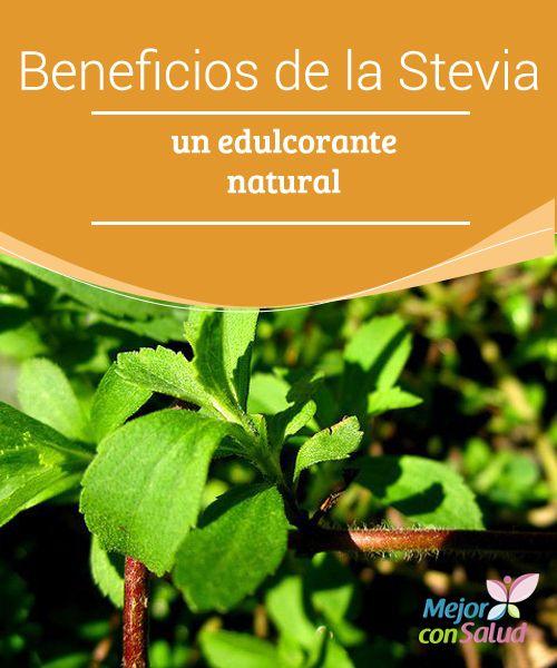 95 best Stevia, beneficios y recetas images on Pinterest