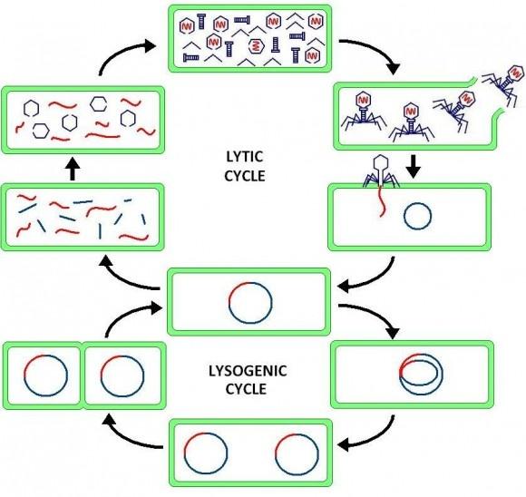 Solución a infecciones bacterianas multiresistentes.