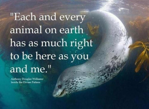 Whether or not a creature is disabled, that doesn't matter. Every living, breathing thing has a right to be on this Earth. Clearwater Marine Aquarium helps all marine creatures.