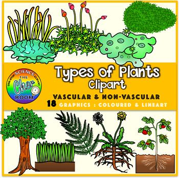 You'll be getting 18 graphics of the following:Vascular Plants:FernTreeDandelionGrassTomato PlantNon-Vascular Plant:MossLiverwortHornwortPin CushionThis is a spin-off set for my plants mega bundle. Check them out here:Plants Clipart Bundle (Secondary Standards) Reproduction in PlantsTropism in Plants (Stimuli and Response)Transport in PlantsPhotosynthesisSupport in PlantsYou may also want to check out the Plants Clipart Bundle (Elementary Standards) consisting of the following sets:Plants in…