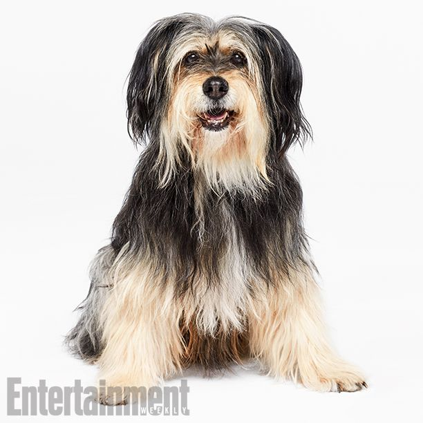 The 'Gilmore Girls' (and Guys) Are Back! Exclusive Photos of the Stars Hollow Crew | Sparky (Paul Anka the Dog) | EW.com