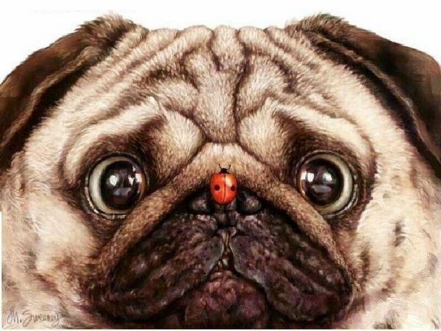 Ladybug & Pug