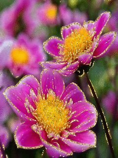 Animated Images, Decent Animated Images, Nice Animated Images, Glitter Graphics, Animated gif Images, Greetings, Wishes, Comments, Roses, Birthday Graphics, Belated Birthday Graphics, Christmas Greetings, Diwali Greetings, Dussehra Greetings, Eid Greetings, Holi Greetings, Independence Day, Republic Day, Friendship, Love, Valentine's Day Greetings, Friendship Day Greetings, New Year Greetings, Inspirational Quotes, Ram Navami Greetings, Ramadan Greetings, Jai Shree Krishna Images
