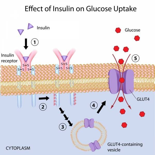 insulin response, carbohydrates, Oral Glucose Tolerance Test, ogtt, blood glucos