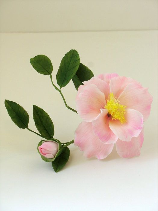 Pale Pink Camillia