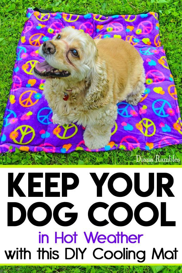 Diy Dog Cooling Mat Sewing Tutorial Want To Keep Your Dog Cooled Off This Summer Here Is A Diy Dog Cooling M Dog Cooling Mat Dogs Diy Projects Diy Dog Stuff