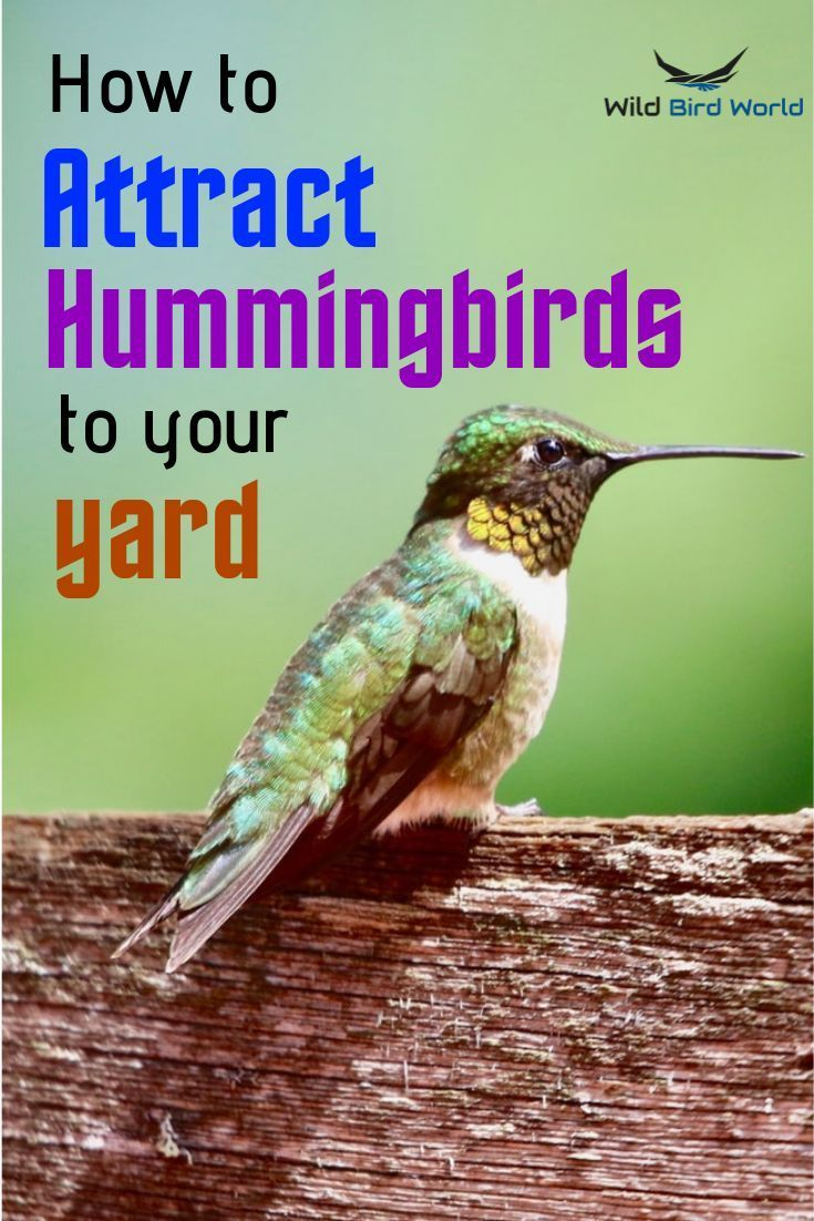 How To Attract Hummingbirds To Your Yard In 2020 How To Attract Hummingbirds Humming Bird Feeders Attract Wild Birds