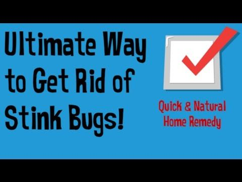 3 Ways to Get Rid of Stink Bugs Naturally - wikiHow
