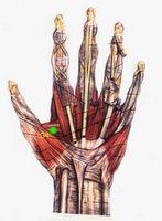 Yamamoto – Zhen Jiu 1- Para problemas acometendo a parte superior do corpo. Yamamoto recomenda palpar HEGU (IG4) bilateralmente e escolher o lado mais sensível