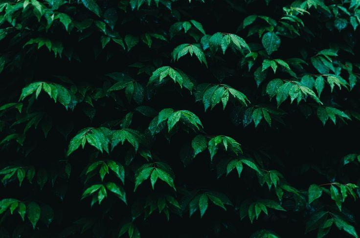 Foliage, leaves, hedge and leafe HD photo by Kelly Sikkema (@kellysikkema) on Unsplash