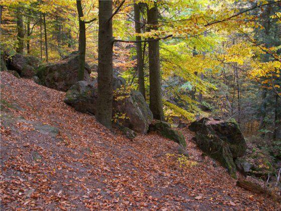 Immagine di http://www.polskie-gory.pl/images/Swietokrzyskie/swietokrzyskie.jpg.
