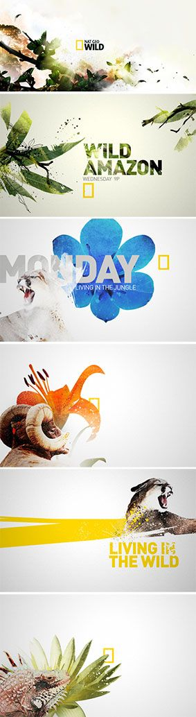 Nat Geo Wild's beautiful use of branding and artwork to promote their programming! We love this look. #design #illustration