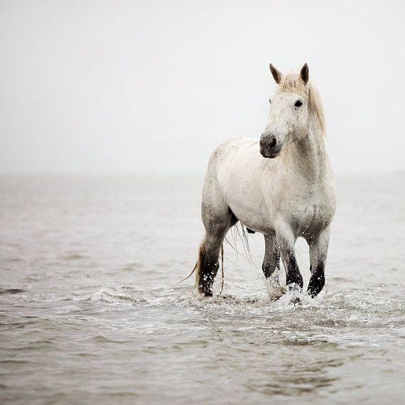 Horse photo - White horse in water by Irene Suchocki