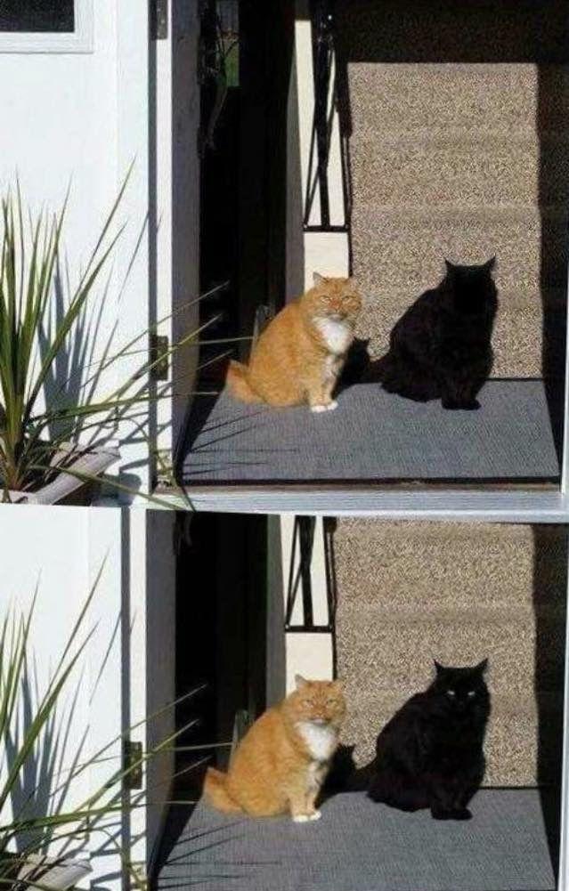 Mas..Mas.. Não era a sombra?