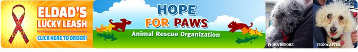 Hope For Paws - Animal Rescue- LA California Great organization helping homeless pets
