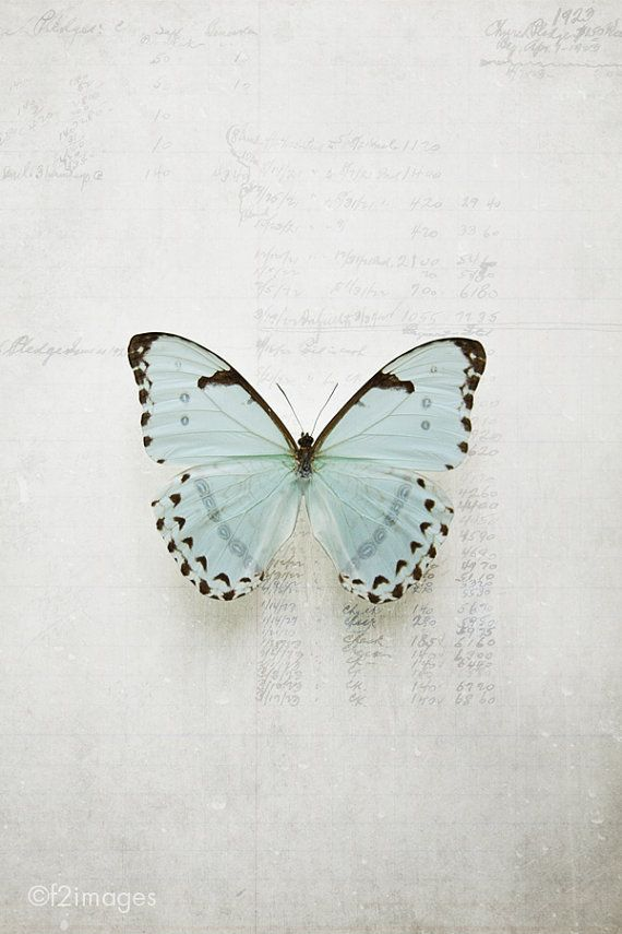 ♕ f2images photography ~ gorgeous Morpho butterfly on metallic paper