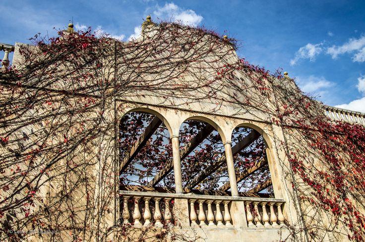 https://flic.kr/p/GcS2RS   Hamilton Gardens Photography Day