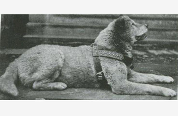 Tokio celebra el 90 aniversario del perro 'Hachiko'