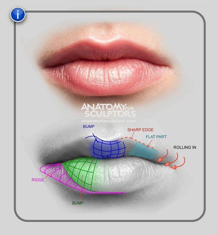 Anatomia da boca