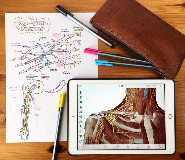 sarahjclifford: Using the Atlas Visible Body app to revise the #brachialplexus !..