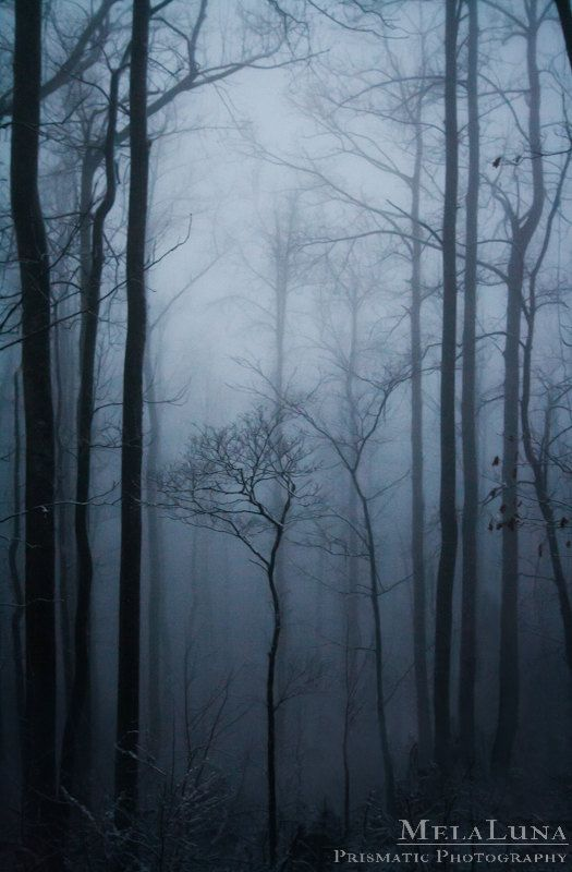 Ethereal Tree Photography, Mystic Forest, Winter Photo, Blue Ridge Mountain Photography, Dreamy, Moody Mystical Art, Spiritual Wall Decor