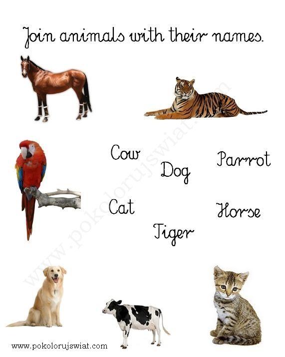 Karty pracy  Dopasuj nazwy zwierząt