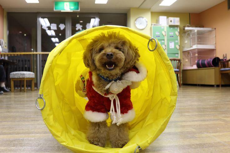 トンネルを抜けると笑顔の風太サンタさんが登場しましたよ。