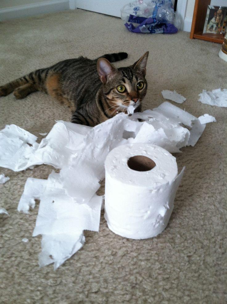 242 best cats shredding tp images on pinterest funny for Commode kitty
