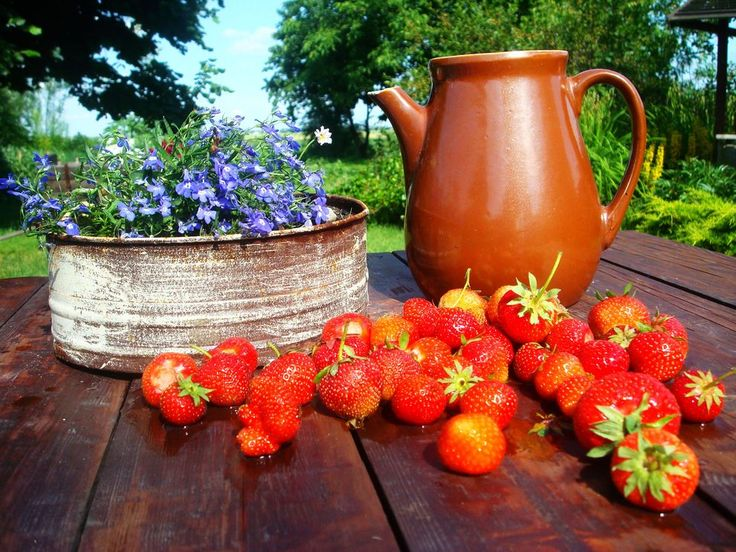 Rośliny i ogród, ogród skąpany w słońcu:) nareszcie lato!!! - duuużo słońca,opalanie,zapach kwiatów,zieleni oraz zimne piwko+ogóreczek małosolny;) zapraszam:)