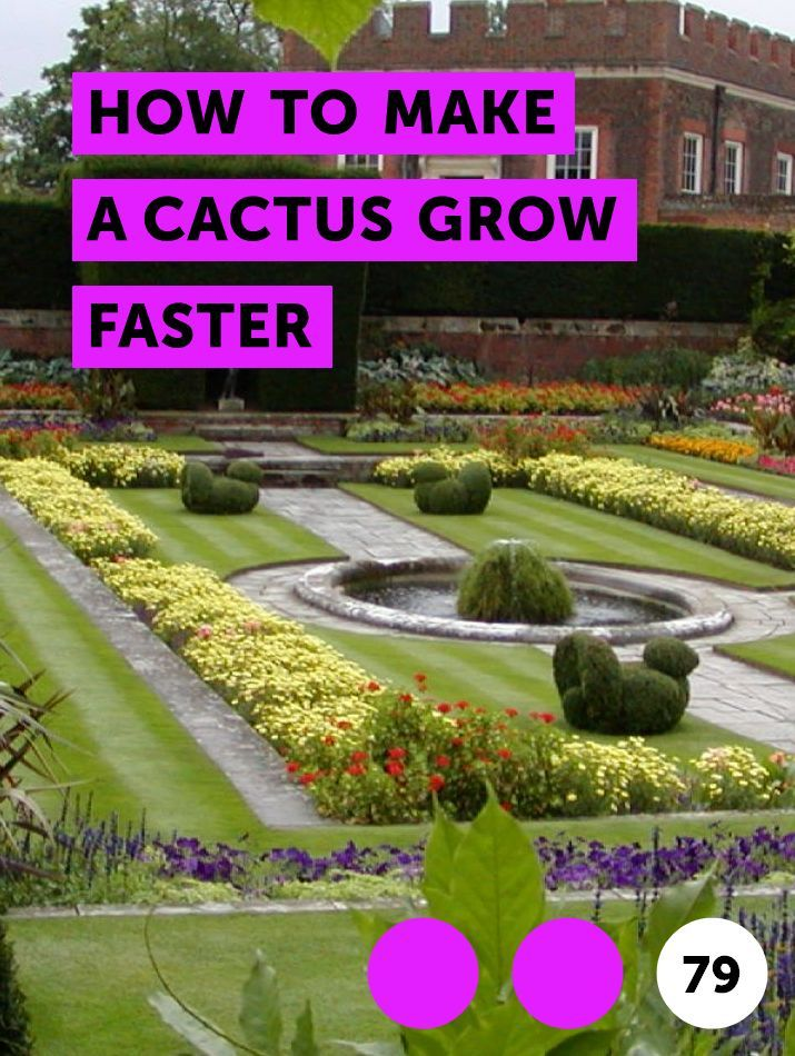 Learn How To Make A Cactus Grow Faster How To Guides Tips And Tricks Garden Soil Planting Vegetables Growing Dahlias