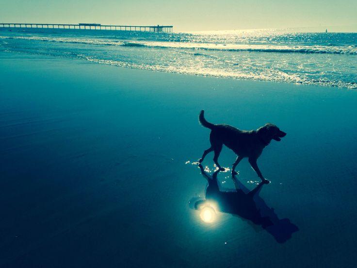 My doggy Dillie - Dog Beach, Ocean Beach, CA