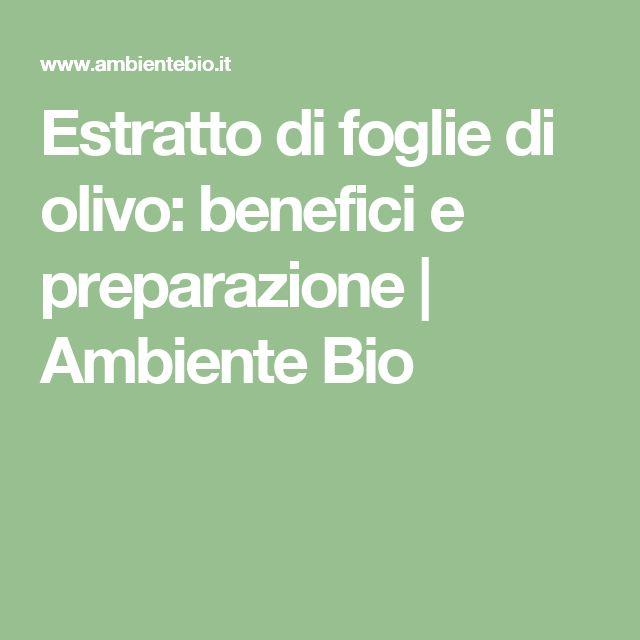 Estratto di foglie di olivo: benefici e preparazione | Ambiente Bio