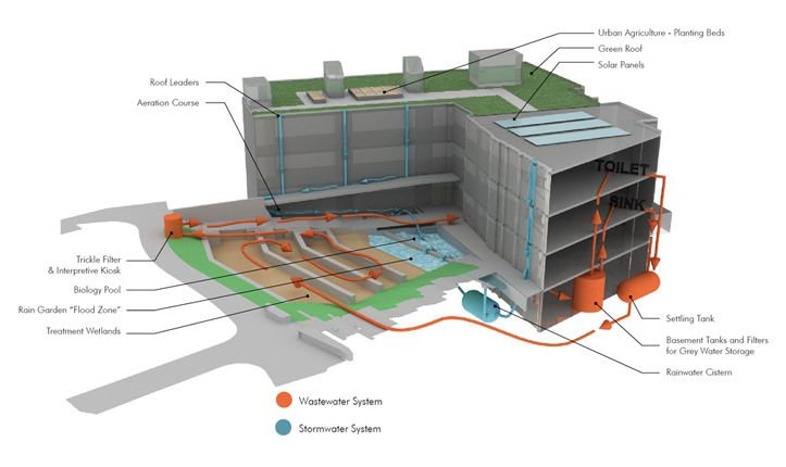 Sidwell Friends School: The landscape and building function as a single integrated system that is designed to capture, clean, and re-use wastewater from the school. Dirty water and sewage flows from the kitchen and bathrooms into settling tanks, where solids are removed, before being released underground in the constructed wetland. The water circulates through the landscape for three to five days before it is re-used in the building's toilets and cooling tower.  Photo: Andropogon Associates