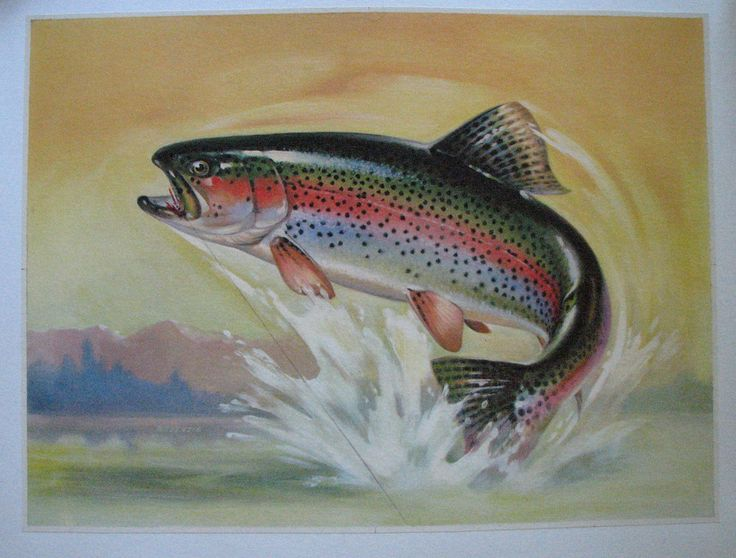 """1940's Antique Trout & Fly Lure Original Vintage Poster AGE: c. 1940's CONDITION: A, Linen Mounted This beautiful trout poster is considered a """"stock"""" poster with no words printed on it. The owner of"""