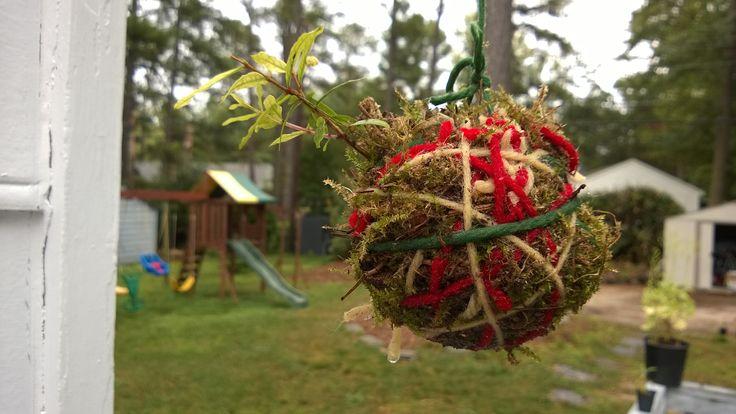 String garden pomegranate