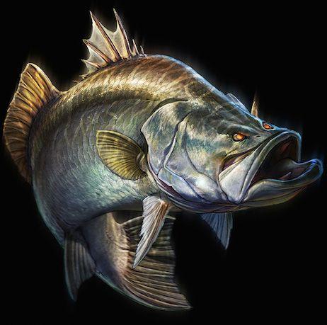 Fish illustration by Tommy Kinnerup: #Barramundi