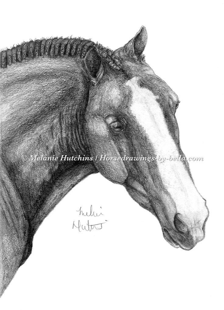Portrait of Ribbons.  Copyright Melanie Hutchins / horsedrawings-by-bella  Follow me on Facebook: https://www.facebook.com/Horsedrawingsbybella.MelanieHutchins Twitter: https://twitter.com/MelHTheArtist YouTube: https://www.youtube.com/channel/UCZDEjNKuowAo92BhnMWWBzA