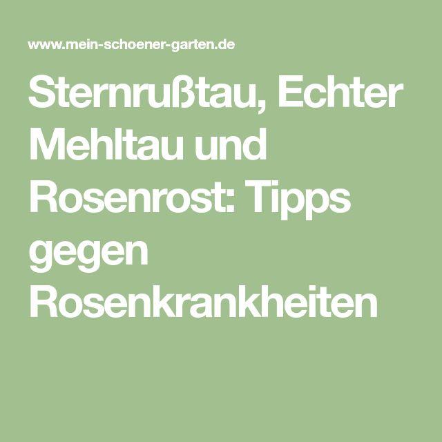 Sternrußtau, Echter Mehltau und Rosenrost: Tipps gegen Rosenkrankheiten