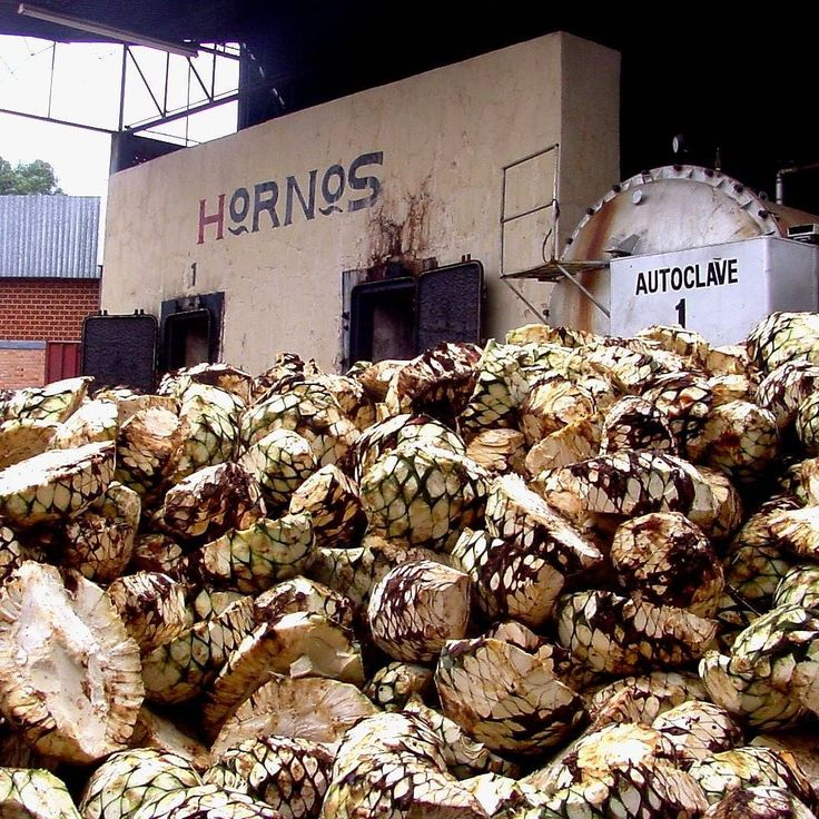 A part of the process to make #blueiguanatequila #tequila #agave #mexico #beautiful #mexicocolors #mexicolindo #mexico_maravilloso #mexicotravel #mexico_great_shots #mexico_photolovers #naturaleza #natura #naturelover #nature #igtravel #travelingram #instatraveling #instatravel #naturephotography #naturelovers #traveler #cool #beautifulday #beauty #travel #travels #naturaleza #instacool #travelphotography