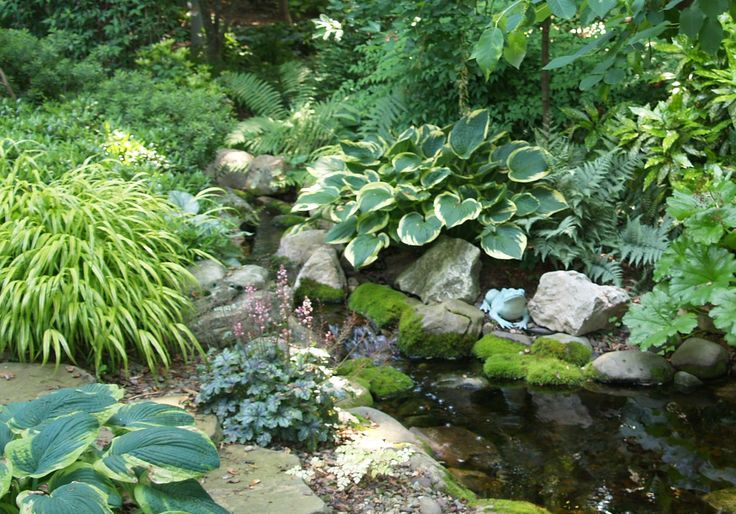 17 best images about hostas plants and gardens on for Recommended pond plants