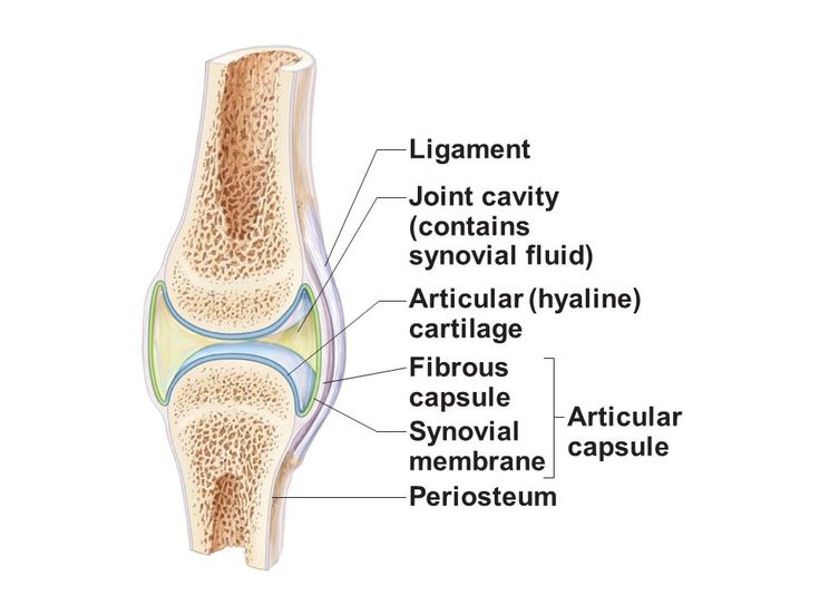 Image result for general structure of synovial joint