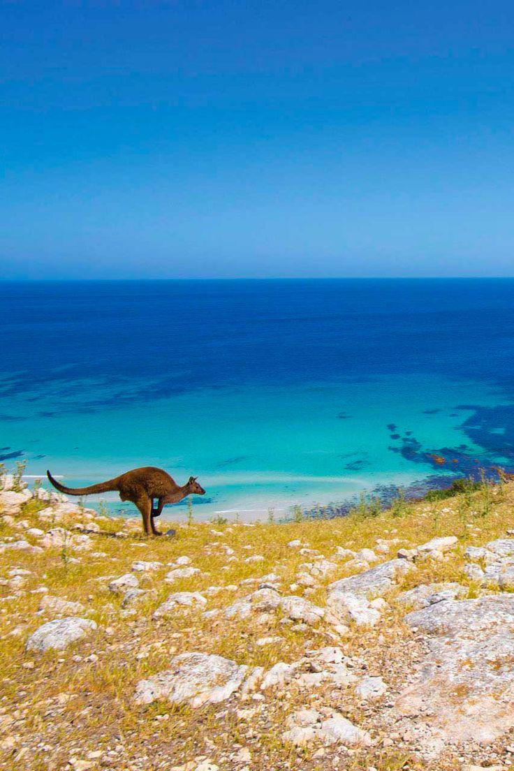 Discover Kangaroo Island, the island of kangaroos
