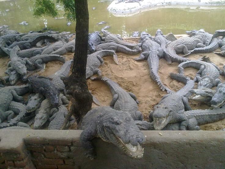 17 best outdoors images on pinterest big mouth crocodiles altavistaventures Gallery