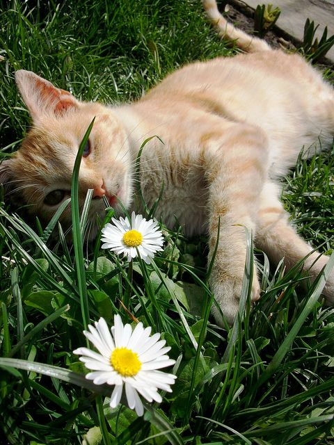 Agustito entre flores