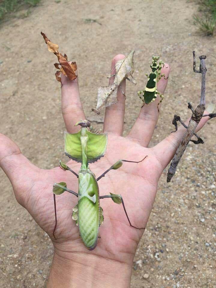Nature at it's best.Brilliant disguises.
