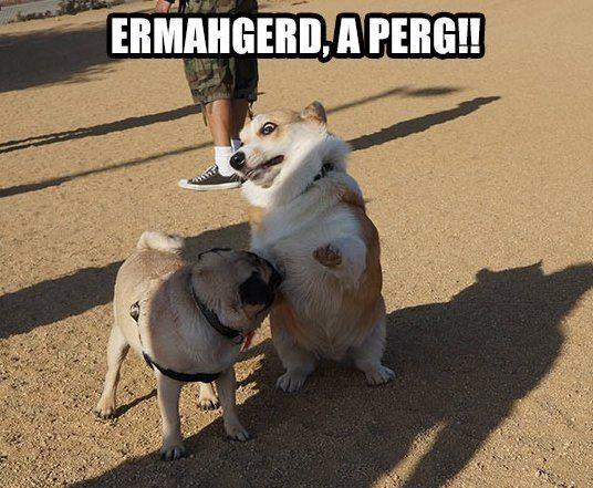 Funny - Corgi spots a pug - www.funny-pictures-blog.com